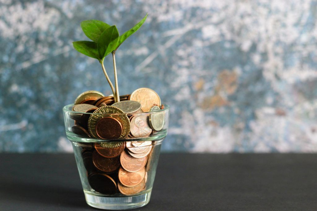 money in green plant in clear glass vase